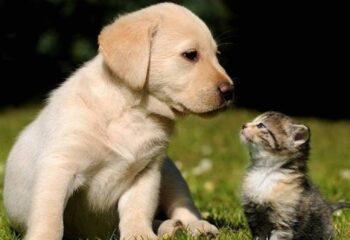 Φυσική κτηνιατρική