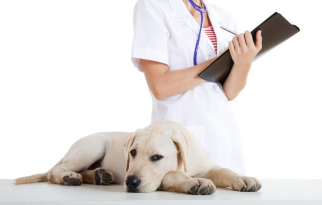 Τι είναι η Εναλλακτική Κτηνιατρική;